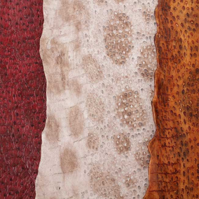 Wolffish leather skin sample